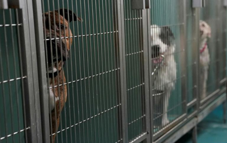 Dogs are kenneled at the Animal Care Center of New York