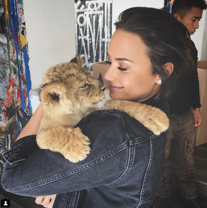 """<p>""""Thank you so much to @blackjaguarwhitetiger for letting me play with your rescued cubs,"""" the """"Sorry Not Sorry"""" singer captioned this shot of herself snuggling a baby tiger. """"What an amazing way to start off the morning!"""" (Photo: <a rel=""""nofollow"""" href=""""https://www.instagram.com/p/BbPgxDVl4_5/?taken-by=ddlovato"""">Demi Lovato via Instagram</a>) </p>"""