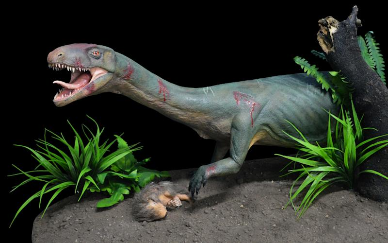 Life model of the new species Teleocrater rhadinus, a close relative of dinosaurs - Museo Argentino de Ciencias Naturales