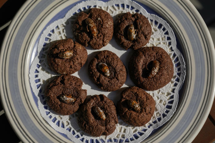 Cicada nymphs appear on top of chocolate cookies at the home of University of Maryland entomologists Michael Raupp and Paula Shrewsbury in Columbia, Md. on May 17, 2021. The cookies are meant to depict the cicada nymph emerging from the dirt. (AP Photo/Carolyn Kaster)