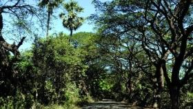 Mangroves on public land to be notified as protected forest in Mira Bhayandar