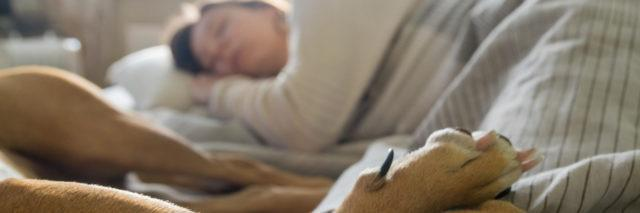 Woman laying in bed with a pet dog.