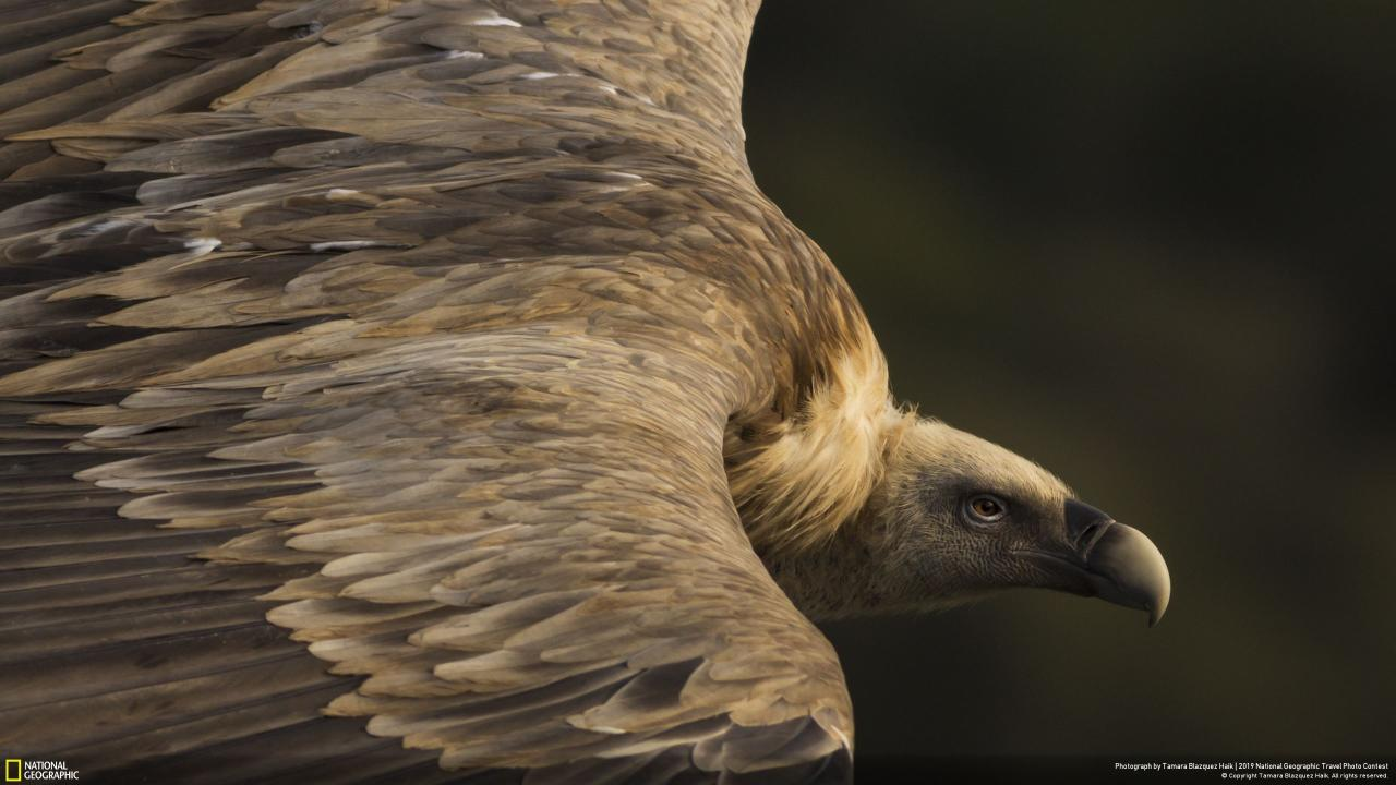 Tamara Blazquez Haik won the nature category with 'Tender Eyes', showing a griffon vulture soaring the skies in Monfragüe National Park in Spain. [Picture: National Geographic Travel Photo Contest]