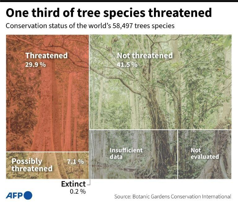 One third of tree species threatened (AFP/Cléa PÉCULIER)