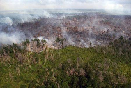 File photo of an aerial view of a forest fire burning near the village of Bokor, Meranti Islands regency, Riau province, Indonesia
