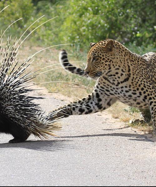 4 epic animal escapes in the wild