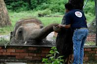 A team of vets and experts from Four Paws have spent months working with Kaavan to get him ready for the airplane trip