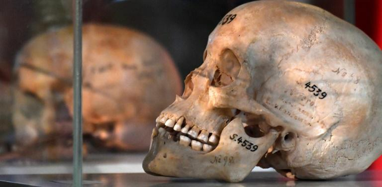 In 2018, Germany returned the bones of members of the Herero and Nama tribes to Namibia