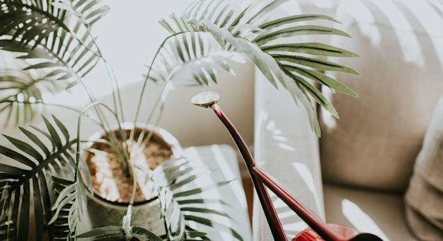 The best products to water indoor plants. (Getty Images)