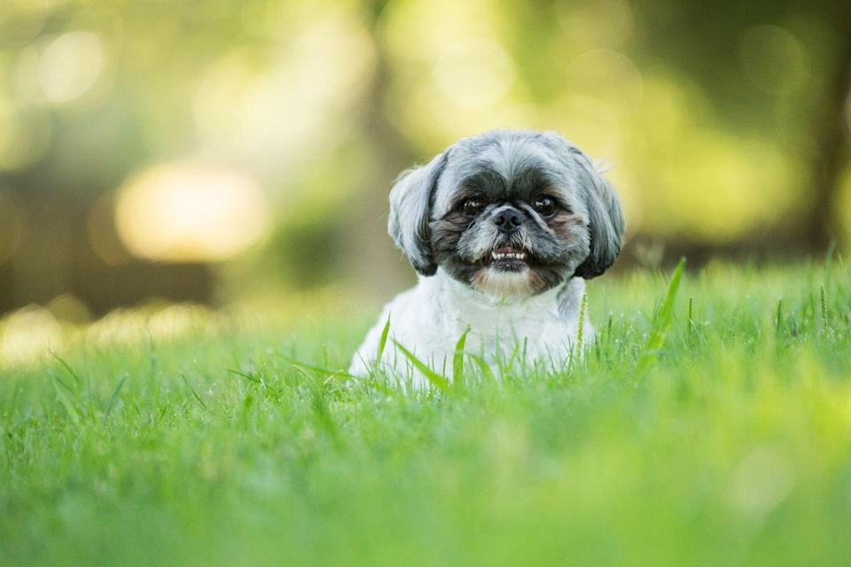 Photo credit: Purple Collar Pet Photography - Getty Images