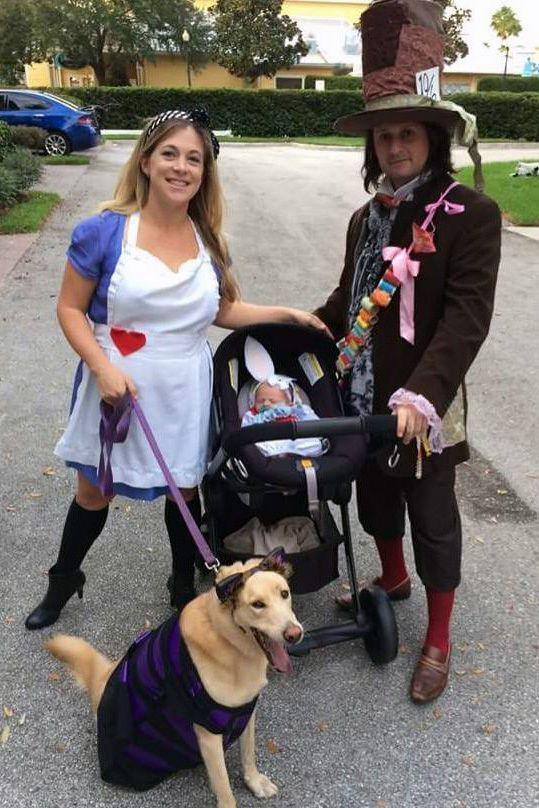 <p>A dog dressed as the Cheshire Cat? Not much is funnier than that.</p>