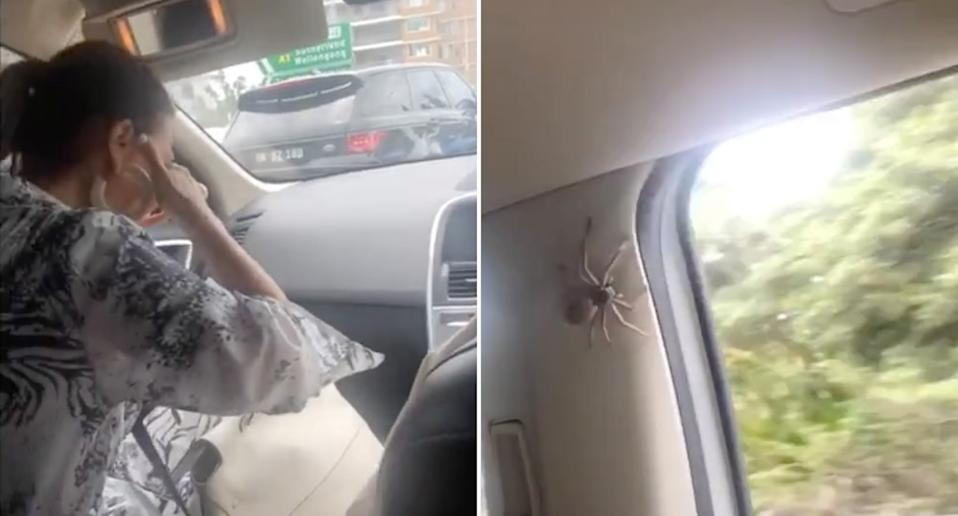 A woman screaming and holding her eyes as a huntsman crawls around inside a moving car.