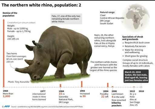 Factfile on the northern white rhino