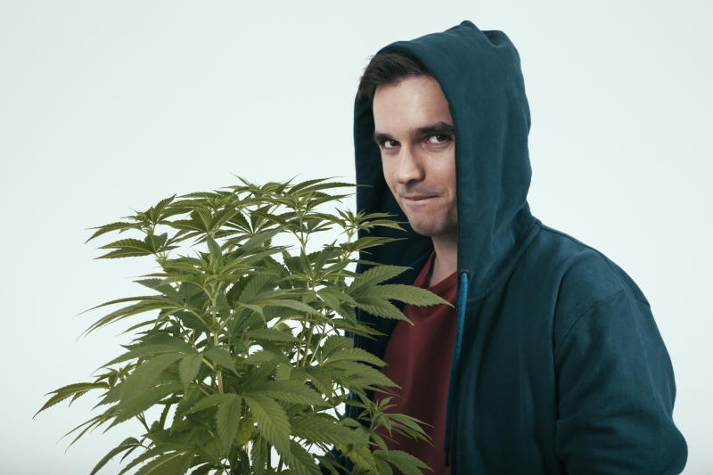 A suspicious-looking young man in a blue hoodie who's holding a potted cannabis plant.