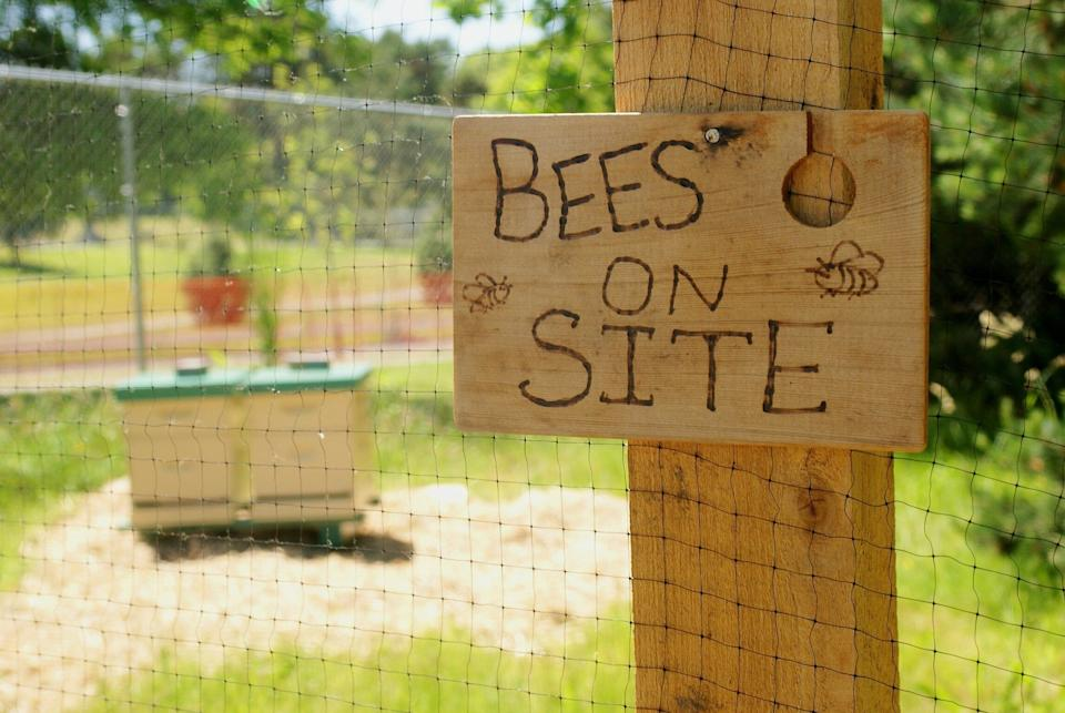 There are dozens of apps where the public can record their bee sightings. (Photo: Mark Cacovic via Getty Images)