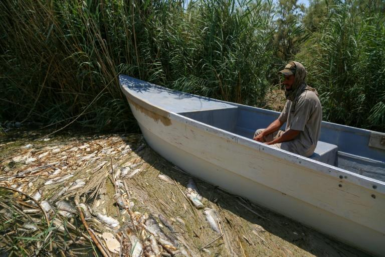 Gangs, smugglers, poison? Iraq's dead fish kick up stink