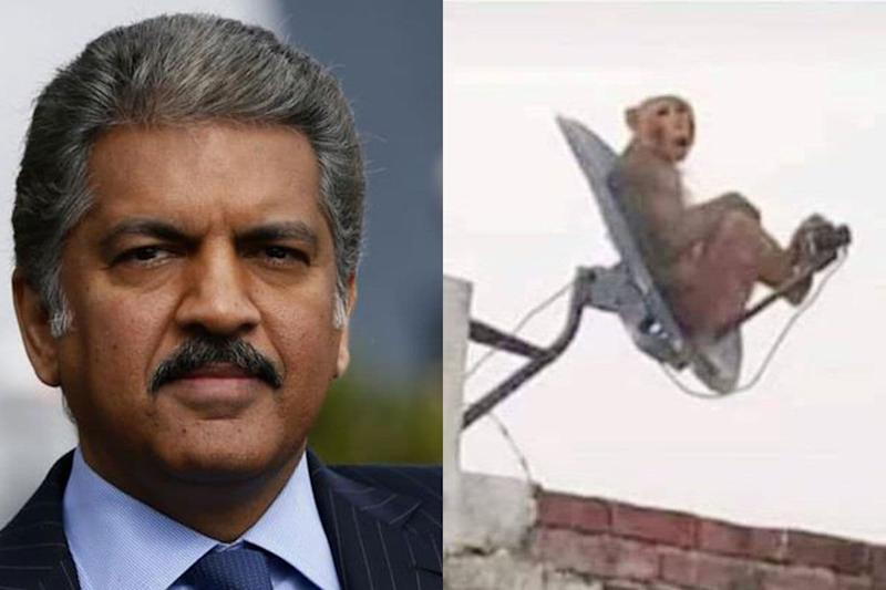 Anand Mahindra Wants You to Caption Photo of Monkey, Will Gift Scale Model of Cars to Winners