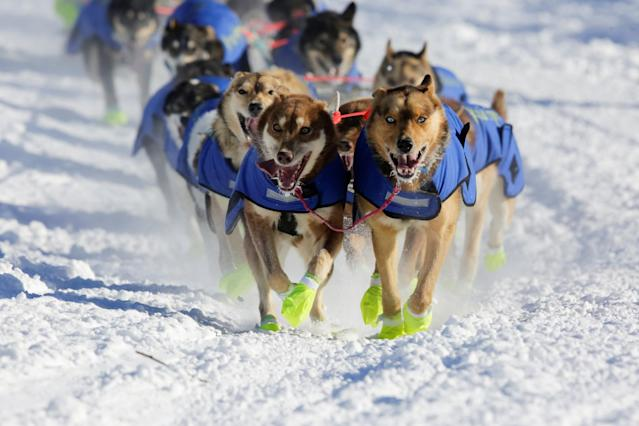 <p>Monica Zappa's team competes in the official restart of the Iditarod, a nearly 1,000 mile (1,610 km) sled dog race across the Alaskan wilderness, in Fairbanks, Alaska, U.S. March 6, 2017. REUTERS/Nathaniel Wilder </p>