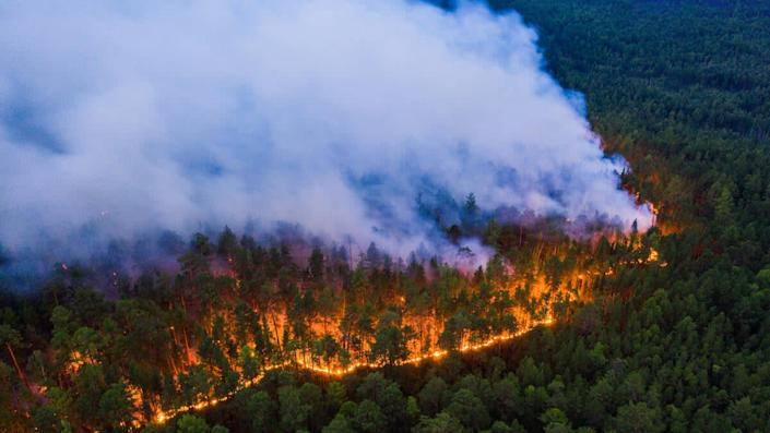 Greenpeace said the fires they documented were 'clear evidence of a climate emergency', and warned the Siberian landscape is being transformed by heat and fire: Julia Petrenko / Greenpeace