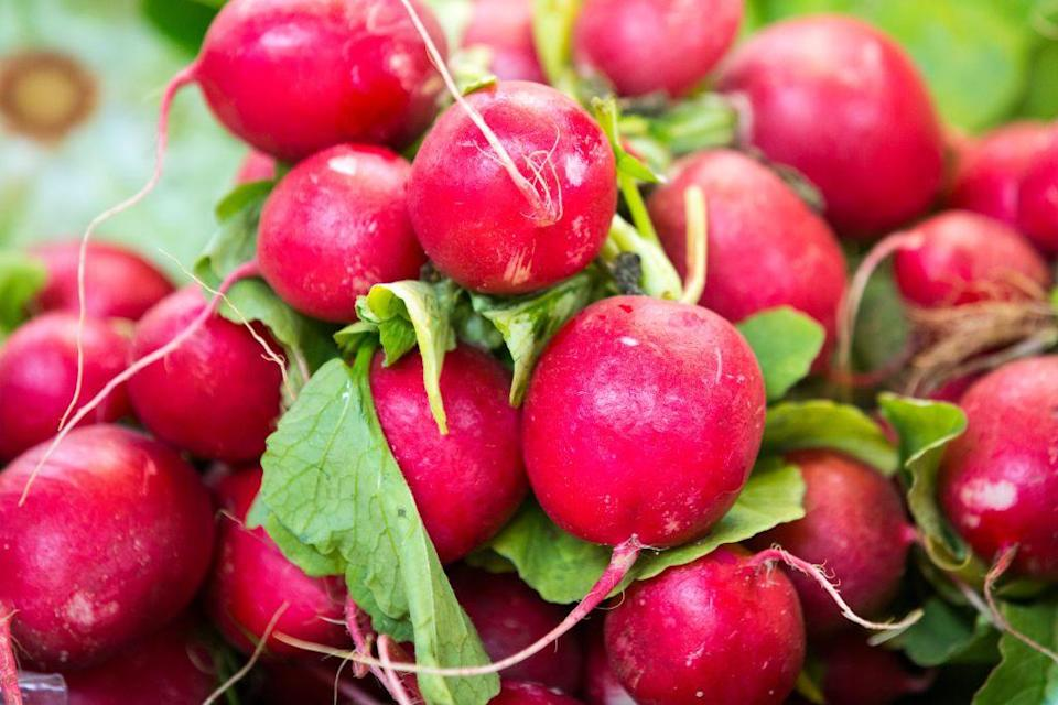 <p>In the South and West, you can plant cold-weather edibles like radishes at the end of February. A general rule of thumb is to sow radish seeds in the garden two to three weeks before the last frost. </p>