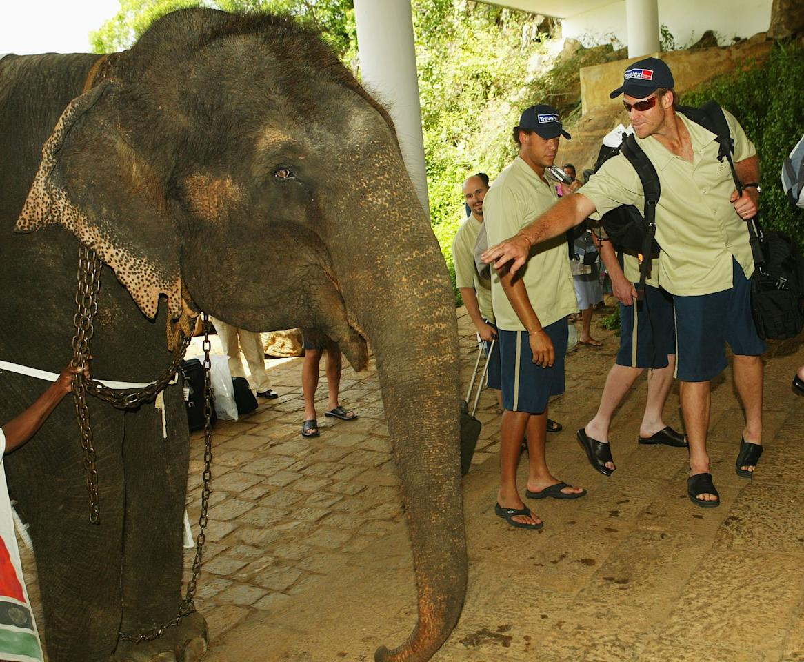DAMBULLA, SRI LANKA  - FEBRUARY 18:  Matthew Hayden of Australia is welcomed to the Kandalama Hotel by an elephant on February 18, 2004 in Dambulla, Sri Lanka. (Photo by Hamish Blair/Getty Images)
