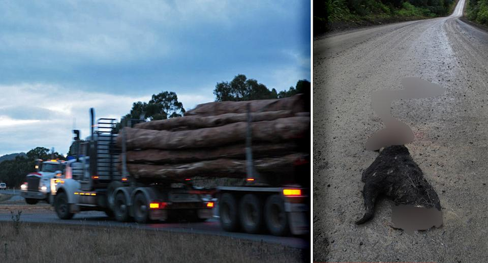 A stock image of trucks carrying logs appears on the left. On the right is photo of a flattened Tasmanian devil.