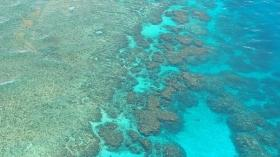 'Great Barrier Reef coral skeletons to help monitor environment' scientists said