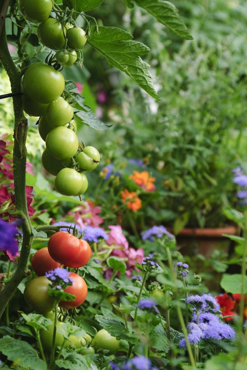 """<p>Placing flowers and veggies together <a href=""""https://www.goodhousekeeping.com/home/gardening/a20706525/plant-flowers-vegetable-garden/"""" rel=""""nofollow noopener"""" target=""""_blank"""" data-ylk=""""slk:in the same beds"""" class=""""link rapid-noclick-resp"""">in the same beds</a> doesn't just save space. It'll help boost your yields and keep plants happy by attracting more pollinators. </p><p><a href=""""https://www.goodhousekeeping.com/home/gardening/a20706481/companion-garden-planting/"""" rel=""""nofollow noopener"""" target=""""_blank"""" data-ylk=""""slk:RELATED: 26 Plants You Should Always Grow Side-By-Side"""" class=""""link rapid-noclick-resp""""><strong>RELATED:</strong> 26 Plants You Should Always Grow Side-By-Side</a></p>"""