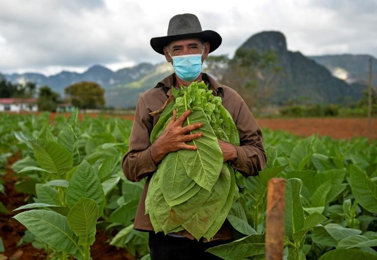 The family of tobacco farmer Eduardo Hernandez, who relied on tourists for a large part of his income, have now started growing their own food