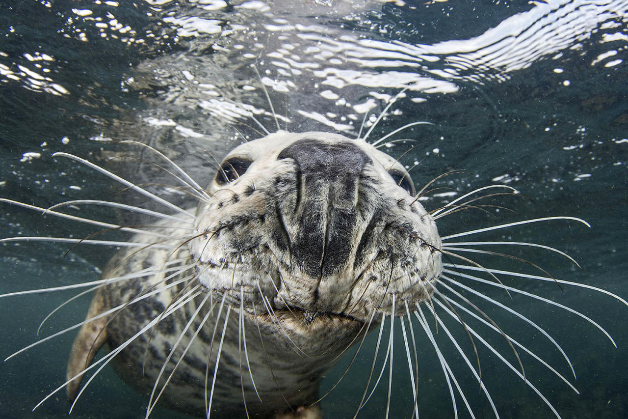 "<p>Robertson-Brown said ""the seal had a good try at stealing my camera. I was right at the surface, at the end of a great dive, and this particular seal had been interacting with the group for about 15 minutes."" (Photo: Frogfish Photography/Caters News) </p>"