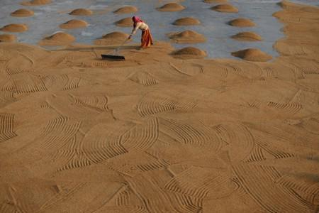 A worker spreads rice for drying at a rice mill on the outskirts of Kolkata
