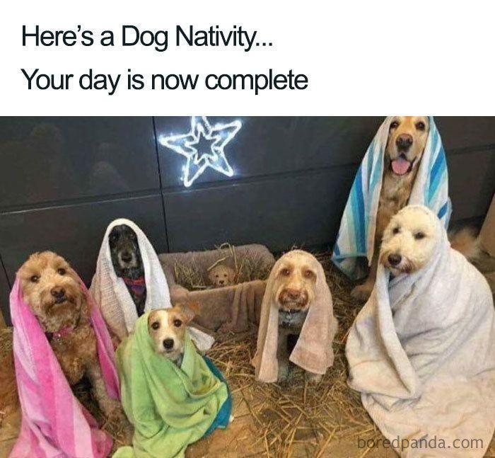 <p>Why was our school Nativity play never this cute?</p>