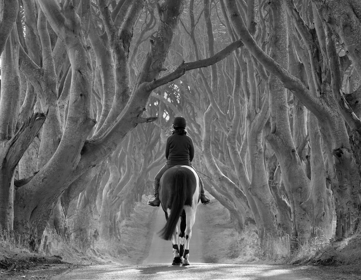 'Riding Out, the Dark Hedges', County Antrim, Northern Ireland: Bob McCallion's image of Melanie riding her horse Rocky, under some 300-year-old birch trees was commended in the 'Living View' category. (Bob McCallion, Landscape Photographer of the Year)