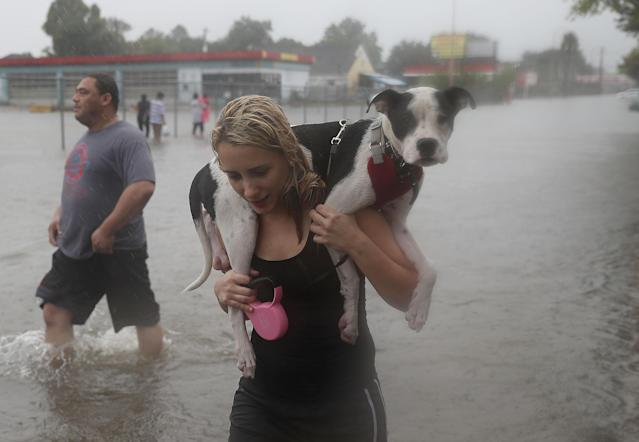 Naomi Coto carries Simba as she evacuates her home after the Houston area was inundated with flooding from Hurricane Harvey on Aug. 27, 2017. Harvey, which made landfall north of Corpus Christi late Friday, is expected to dump upwards of 40 inches of rain in Texas over the next few days. (Photo by Joe Raedle/Getty Images)