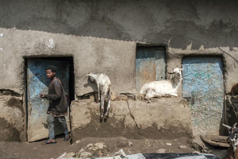 Ethnic Amharas have been relocating to abandoned farms and homesteads in a state-backed campaign