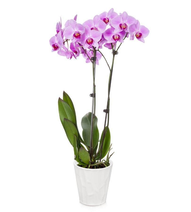 <p>This <span>Florists.com Large Pink Orchid</span> ($65) is a gorgeous gift.</p>