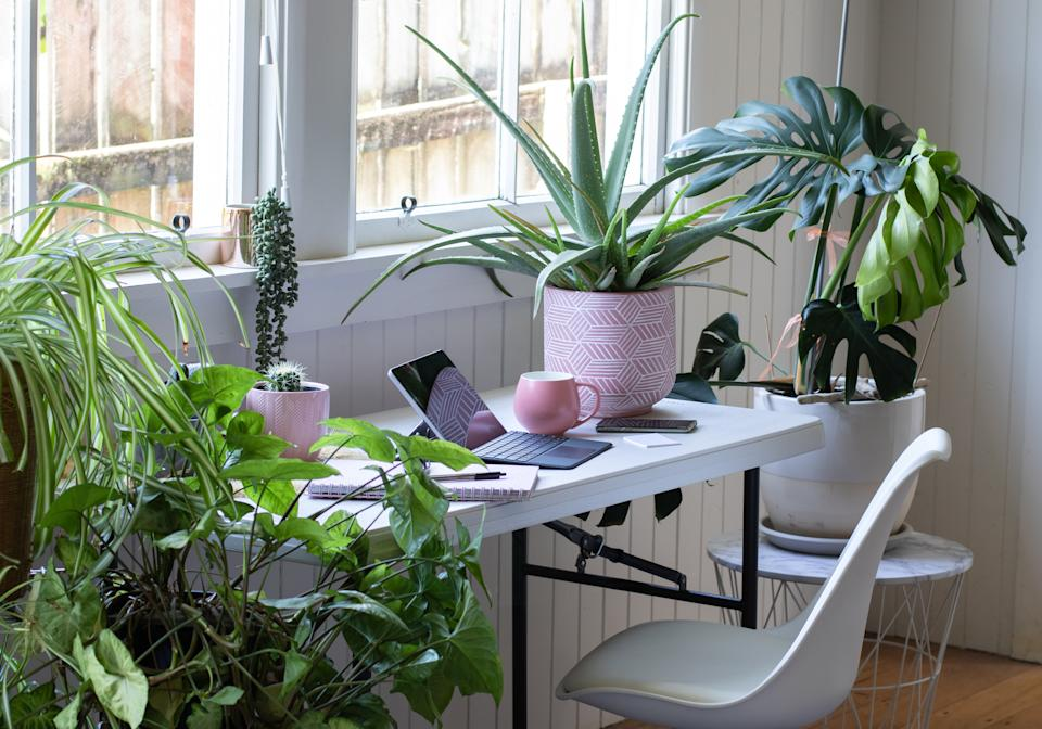 Houseplants can not only pretty-up your workspace but provide a whole host of health benefits. (Getty Images)
