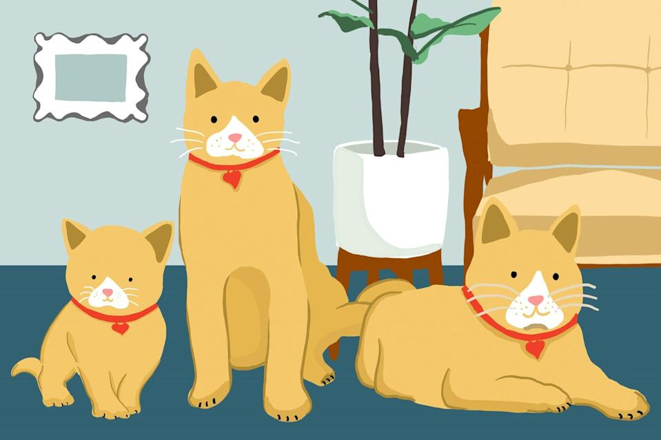 Illustration of three different cats at different ages