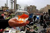 A goldfish bowl is often part of a Nowruz display where the fish represents life