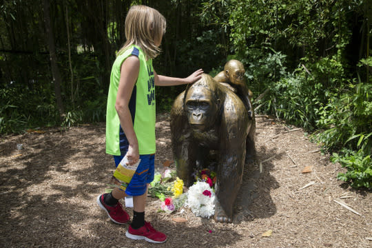 <p>A child touches the head of a gorilla statue where flowers have been placed outside the Gorilla World exhibit at the Cincinnati Zoo & Botanical Garden, Sunday, May 29, 2016, in Cincinnati. On Saturday, a special zoo response team shot and killed Harambe, a 17-year-old gorilla that grabbed and dragged a 4-year-old boy who fell into the gorilla exhibit moat. Authorities said the boy is expected to recover. He was taken to Cincinnati Children's Hospital Medical Center. <em>(AP Photo/John Minchillo)</em> </p>