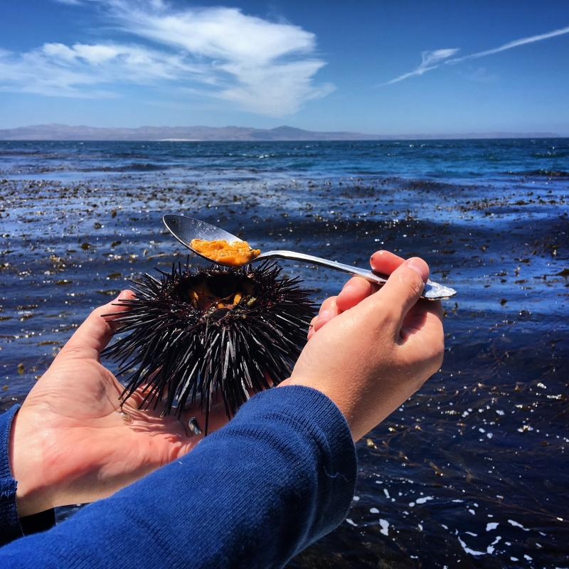 Food-Sea Urchin Documentary