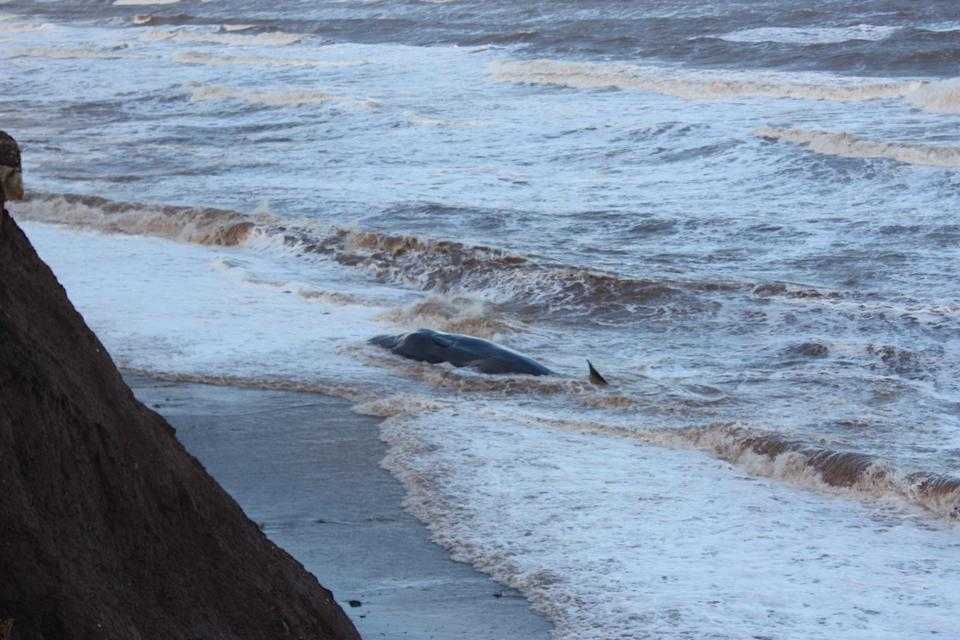 One of the whales washed up on the beach. (PA)