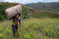 Colombian coca leaf collector Edison Tovar works in the mountains of Patia (AFP/Raul ARBOLEDA)