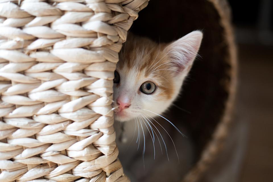Strange sounds, smells and faces may scare your cat or dog. Help them to feel safe when in new environments or situations. (Photo: Getty Creative)