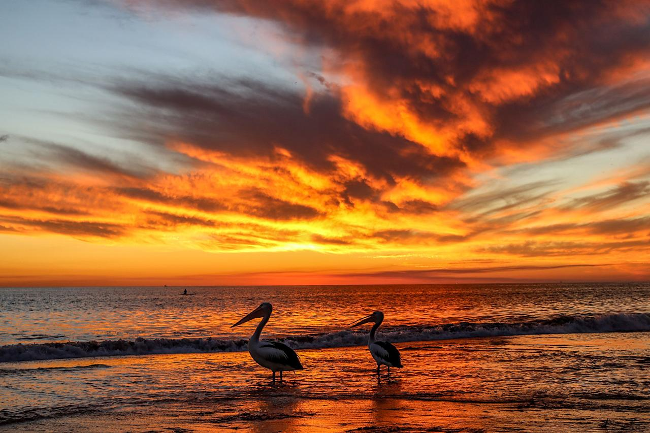 <p>Pelicans view a dramatic sunset over Adelaide beach displaying vibrant orange and pink colors, Adelaide, Australia on May 11, 2017. (Photo: Ghazzal/Rex Shutterstock) </p>