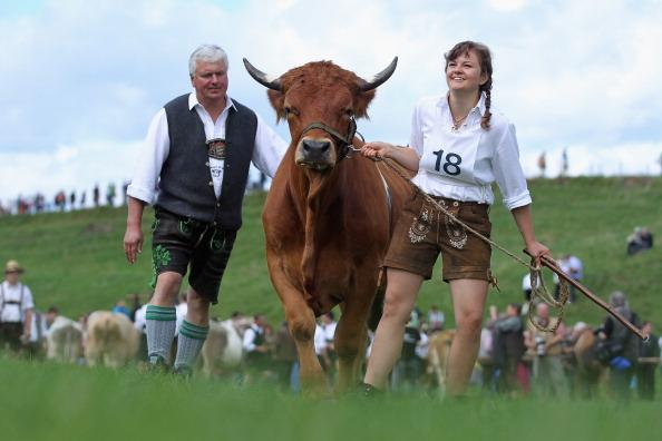 Participants dressed in traditional Bavarian lederhosen arrive for the 5th ox-racing championship (5. Muensinger Ochsenrennen) on August 26, 2012 in Muensing, Germany. The competition, which only takes place once every four years, is a race of jockeys riding bareback on oxen across a field and is complemented with a morning procession and 'ox-ball' (featuring roasted ox) in a festivities tent after the races. (Photo by Johannes Simon/Getty Images)