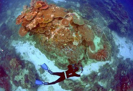 Oliver Lanyon, Senior Ranger in the Great Barrier Reef region for the Queenlsand Parks and Wildlife Service, takes photographs and notes during an inspection of the reef's condition in an area called the 'Coral Gardens' located at Lady Elliot Island and 80 kilometers north-east from the town of Bundaberg in Queensland, Australia, June 11, 2015. REUTERS/David Gray/File photo
