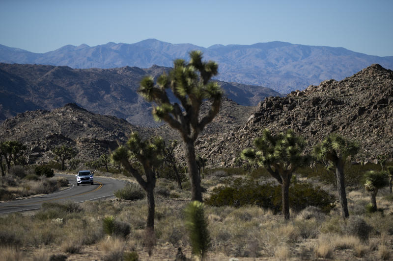 FILE - In this Jan. 10, 2019, file photo, a car drives along the road at Joshua Tree National Park in Southern California's Mojave Desert. Joshua Tree National Park is gearing up for the huge crowds drawn to the Southern California desert during the holidays. The National Park Service says the period from late December through Jan. 1 brings some of the busiest days, and campgrounds and parking lots will likely be full. At times, the park becomes drive-through-only because there are no more parking spaces. (AP Photo/Jae C. Hong, File)