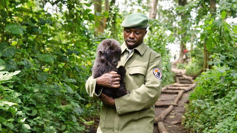 """<p>Virunga National Park in the Democratic Republic of Congo is Africa's oldest national park and one of the most biologically diverse areas on the planet, best known as being the home of critically endangered mountain gorillas. This Oscar-nominated documentary tells the true story of the individuals who risked their lives to protect the last mountain gorillas, even in the midst of renewed civil war. You don't have to be an animal-lover to love this one.</p> <p>Watch <a href=""""https://www.netflix.com/title/80009431"""" class=""""link rapid-noclick-resp"""" rel=""""nofollow noopener"""" target=""""_blank"""" data-ylk=""""slk:Virunga""""><strong>Virunga</strong></a> on Netflix now.</p>"""
