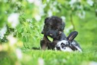 """Honestly? We're unsure if two <a href=""""https://bestlifeonline.com/cute-animal-photos/?utm_source=yahoo-news&utm_medium=feed&utm_campaign=yahoo-feed"""" rel=""""nofollow noopener"""" target=""""_blank"""" data-ylk=""""slk:cuter animals"""" class=""""link rapid-noclick-resp"""">cuter animals</a> even exist. Look at them!"""